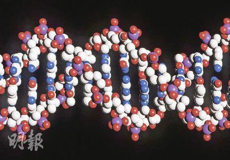 圖為科學家理解的人類基因結構圖。英國科學家於09年12月在科學雜誌《自然》發表肺癌和皮膚癌的完整基因圖譜,負責計劃的英國威康信託基金的研究小組說,完整基因圖譜可為血液測試提供方便,從而盡早發現患者的突變腫瘤,還可為新藥研製提供目標。目前世界各地的科學家正合作繪製導致人類患癌的各種基因圖譜。由10個國家研究人員組成的國際癌症基因組聯盟表示,所有基因圖譜的繪製工作浩瀚巨大,要完成至少還需要5年時間,以及巨額資金。