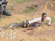 An re-enactment (重演) of a python (大蟒蛇) attack, South Africa.