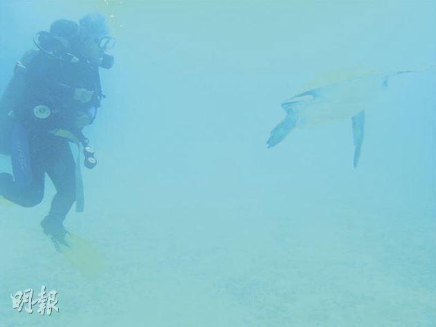 A curious sea turtle approaching me.(photo by Amanda Yu)