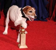 """Uggi the dog poses with the trophy for the Best Movie """"The Artist"""" at the 69th annual Golden Globe Awards at the Beverly Hilton Hotel in Beverly Hills, California, 15 January, 2012. AFP Photo"""