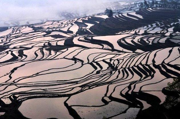 This picture taken on on March 11, 2012 shows a hillslope of paddy fields in the mountainous region of Yuanyang, southwest China's Yunnan province. AFP Photo