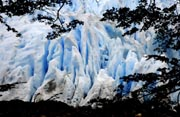 A view of the Perito Moreno glacier February 28, 2008 taken from the Lenga's forest in the Park and National Reservation Los Glaciares, an ecotourism destination in Patagonia, Argentina, declared by the UNESCO as Natural World Heritage Site. AFP Photo