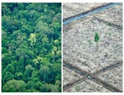Combo of photos taken on October 16, 2010 during an aerial survey mission by Greenpeace over Sumatra island. AFP Photo