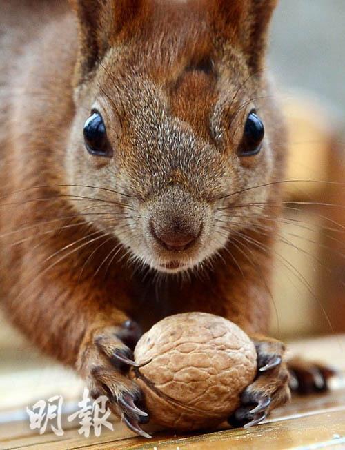 A squirrel (AFP Photo)