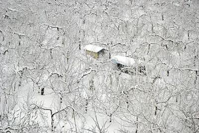 A forest covered with snow (Mingpao Photo)