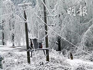 A snow storm in a forest in mainland China in 2008. (CNS Photo)