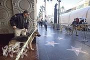新一輯《星球大戰》電影周一在美國洛杉磯作全球首映,警員帶着炸彈探測犬在荷李活大道戒備。(法新社)