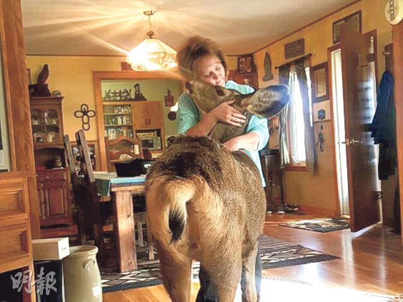 麥戈伊一家視小鹿「法妮」為親人,痛心牠慘遭無情槍殺。(網上圖片)