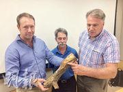 城市林務諮詢小組成員Paul Barber(左起)、柯根源及Philip G Cannon早前曾到油尖旺區視察,並在其中一棵受褐根病感染的古樹名木上取走部分根部組織,從真菌侵蝕的痕迹及根部軟化的程度可見,該樹健康和結構有惡化迹象。(賴嘉梨攝)