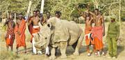 由於人類盜獵和入侵棲地,目前全球只剩3頭北非白犀牛亞種,碩果僅存的一頭雄性名為蘇丹(Sudan,上圖中),生活於肯亞的奧佩傑塔自然保護區(Ol-Pejeta Conservancy)。保育人員上月中舉行為期兩天的活動,請來馬賽族戰士和蘇丹合照,希望喚起公眾關注和籌集保育基金。(法新社)