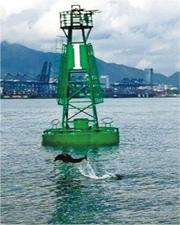 有海豚前日上午在深圳鹽田港戲水,是該海域4月以來第二次發現。(網上圖片)