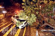 肇事馬莎拉蒂跑車失控連環撞塌交通燈柱及大樹,車頭嚴重損毁及遭大樹壓住,幸未有造成傷亡。(蔡方山攝)