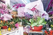 連日揭發失竊的花店專營日本蘭花,被偷9盆蘭花共值2萬多元,最貴一盆售價6800元。