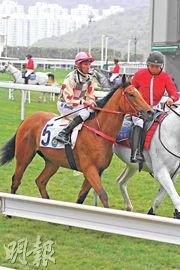 馬會昨公布騎師羅理雅收酬向他人提供貼士,判罰即時停牌15個月,圖為他上周六勝出頭馬「逍遙自在」。(資料圖片)