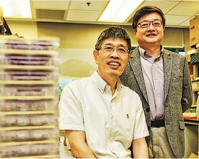 港大新發傳染病國家重點實驗室教授陳鴻霖(左)和愛滋病研究所長陳志偉博士(右)昨介紹實驗室及未來發展,歡迎國家支持港創科發展,認為恒常資金有助人手穩定,並提升科研效能。(郭慶輝攝)
