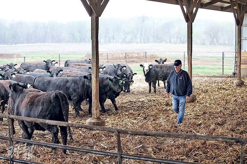 在聯合聲明中,中國同意擴大對美國農產品進口。圖為美國牧場。(新華社)