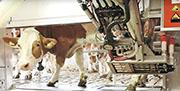 日本農牧業生產力持續低於發達國家平均水平,在「少子化」問題持續惡化下,日本不少農場想辦法靠高科技取代人手作日常操作,並獲政府支持。(網上圖片)