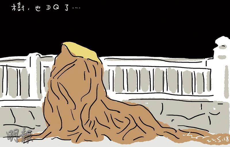 尊子漫畫 地政總署砍般咸道兩石牆樹