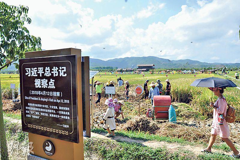 今年1月始正式開幕的海南三亞水稻國家公園集農業觀光、水稻科研和民俗風情為一體。國家主席習近平今年4月曾到此視察。(李泉攝)