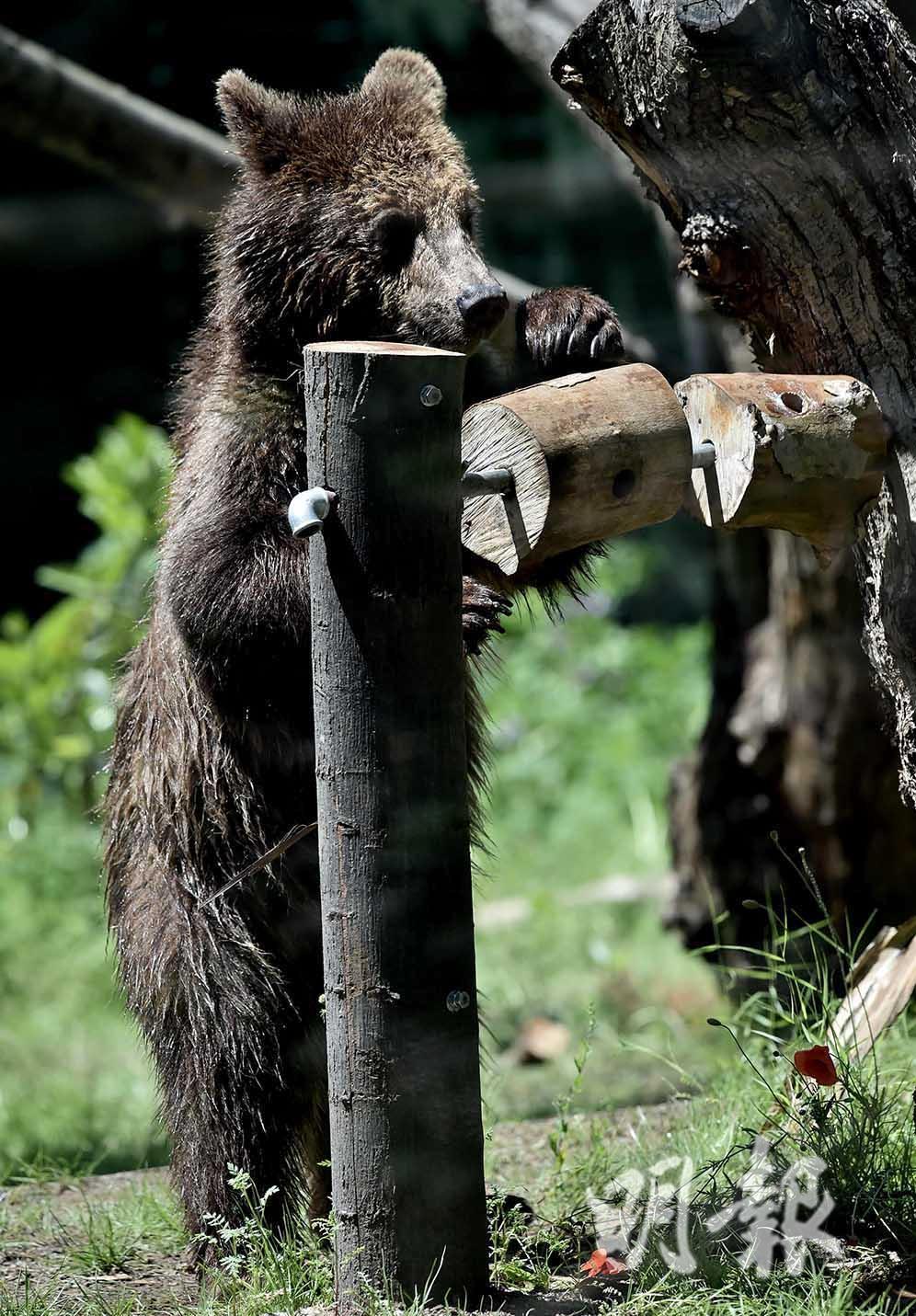 A young bear (AFP Photo)