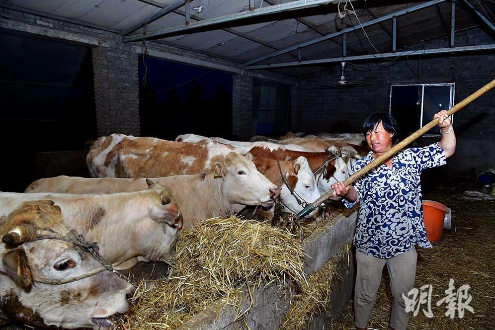 A barn in mainland China in modern times (Xinhua Photo)