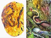 含有「緬甸曉蛇」幼蛇標本的琥珀(左圖)只有約2.5厘米闊、3.9厘米高,學者推測是剛破殼的幼蛇,原長度約9.5厘米。右圖為「緬甸曉蛇」原貌模擬圖。(網上圖片)