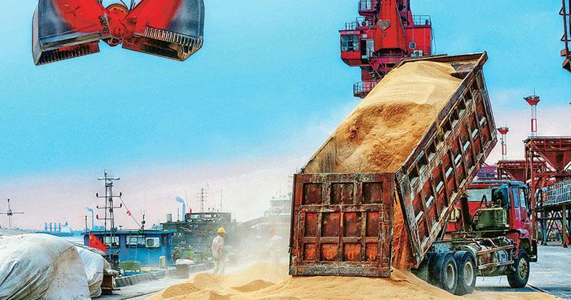 油籽業分析刊物《油世界》表示,如果貿易戰得不到解決,加上南美大豆供應將減少,中國可能在未來幾周被迫再度開始購買美國大豆。圖為8月6日,巴西大豆在江蘇南通一個港口卸貨。(法新社)