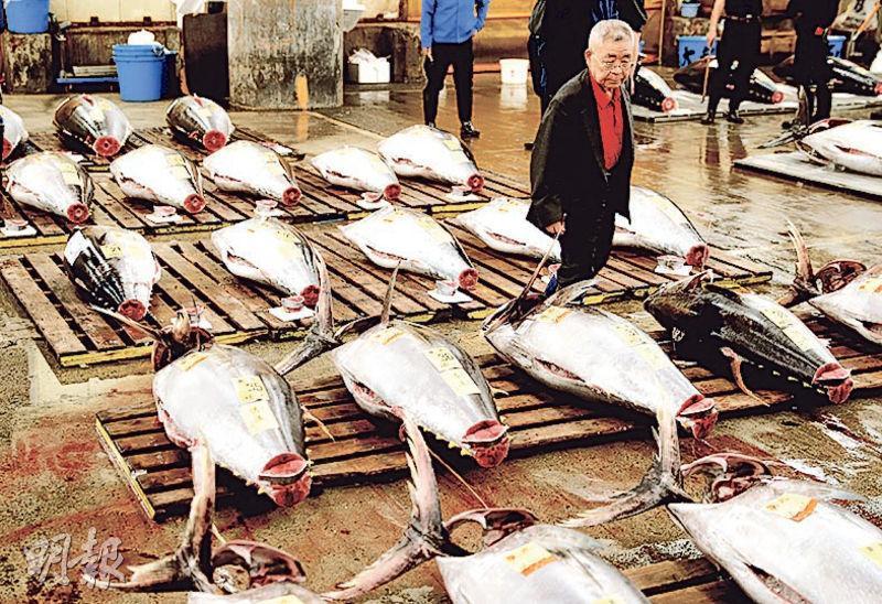 東京築地市場昨日舉行最後一場吞拿魚拍賣會後,正式結束運作,83年歷史終告落幕。(路透社)