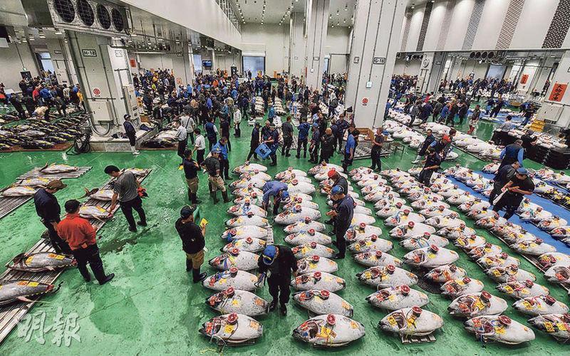 日本豐洲市場昨正式開業,即日舉行首場吞拿魚拍賣會。(法新社)