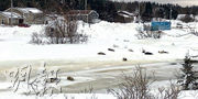 迷途海豹闖入加拿大海邊城鎮羅迪克頓—比特阿姆鎮,引起關注。(網上圖片)