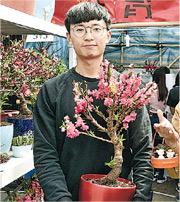 珠育園負責人Nick是香港高等教育科技學院園藝及園境管理課程四年級學生,今年他和一眾同學參加維園年宵,主打賣連根的桃花王,他解釋這款桃花王保留了根,下年能再開花。(楊柏賢攝)