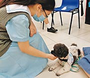 中華傳道會李賢堯紀念中學今學年起引入動物輔助治療,上學期為6名社交能力較弱和情緒不太穩定的中五、中六生治療(圖)。該校輔導員認為,學生與狗相處較開懷,亦令學生更主動參與治療。(學校提供)