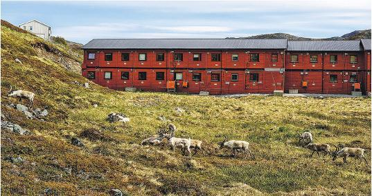 克瓦爾松有大量銅礦,但附近也是馴鹿遷徙時經過的夏季草場,如開採銅礦可能會影響當地馴鹿生態。(路透社)