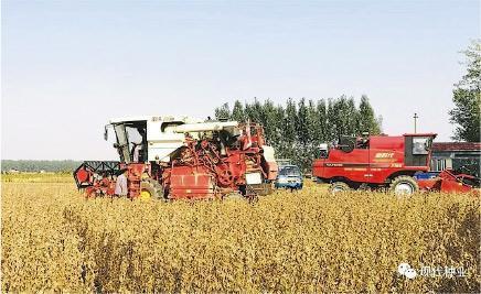 為減少依賴美國大豆,中國年初提出大豆振興計劃,對大豆生產補貼每畝340元,使今年東北大豆種植面積大幅增加。(網上圖片)