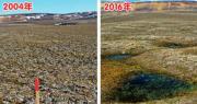加拿大北極圈的莫爾德貝為今次考察中最受影響的地區,左圖及右圖分別為研究團隊在2004年及2016年拍攝的圖片,顯示莫爾德貝的永久凍土在12年間加速融化,出現凹陷形成水坑。(路透社)