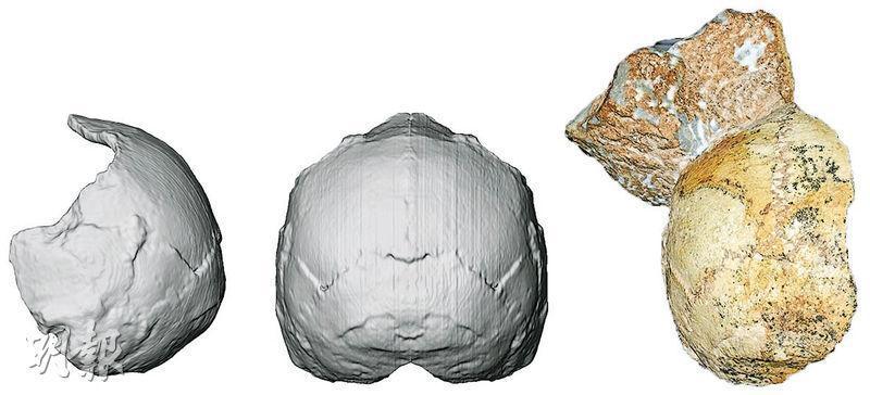 學者周三發布「阿庇狄馬1號」修復及電腦模型照片,確定這個在希臘洞穴掘出的化石屬於21萬年前的智人,倘獲核實,智人抵達歐洲的時間點將再推前逾16萬年。(法新社)