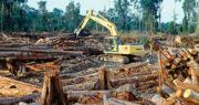 樹木是其中一種被人類快速消耗的地球資源。圖為印尼一片遭砍伐的森林。(網上圖片)