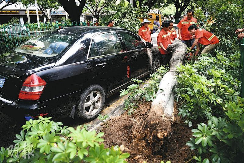 圖為工人在廈門街頭清理被大風吹倒的樹木。(中新社)