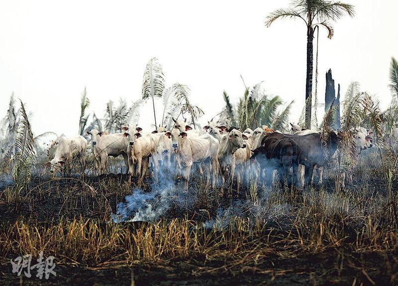 亞馬遜州阿普伊(Apui)一處林地被農民和伐木者清除植被,周二仍有餘燼和煙冒出。(路透社)