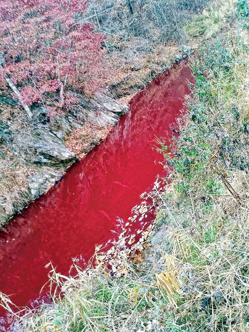 臨津江河水近日一片血紅,原來是豬血作怪。圖為周日(10日)拍攝。(法新社)
