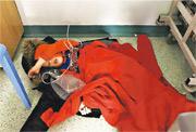 4歲男童杰克在醫院插着喉管睡地板的照片,引發輿論對公營醫療系統問題的關注。(網上圖片)