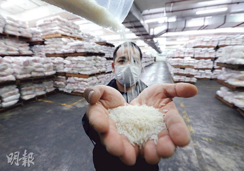 近日超市出現搶米潮,本港米商表示香港米量充足,除政府要求的1.3萬公噸儲存量外,各間米行合共有1.2萬至1.4萬公噸存貨,夠港人吃一個月,呼籲市民不要瘋搶或囤貨。本報記者昨到招商行米倉,內裏放有大量食米。(李紹昌攝)