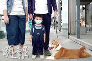 李生一家飼養了一隻8歲的哥基,李太說狗本身少病痛,認為狗與人一樣,有抵抗力能對抗病毒。李生認為狗不能用消毒清潔劑清潔身體,故只會用濕紙巾抹身體。他又說會特別隔開兒子和狗,在家則不讓他們一起玩。他對疫情感擔心,很想知道在家有何方法消毒而不傷害小狗,「聽說用漂白水清洗家居(狗)會青光眼,究竟應該用什麼清潔?」(曾憲宗攝)