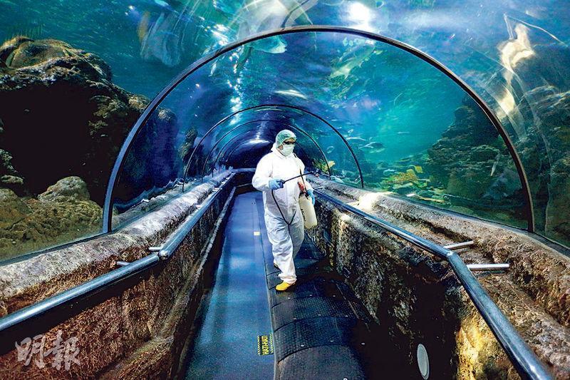 印尼雅加達上周六有穿上全套保護衣物的工作人員,在當地的海洋館消毒。(路透社)