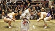 日本體壇持續出現新冠肺炎確診個案,就連日本「國技」的相撲(圖),昨亦出現首宗力士病例。(Getty Images)