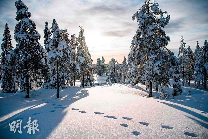 Tracks or footprints of animals in the snow (AFP Photo)