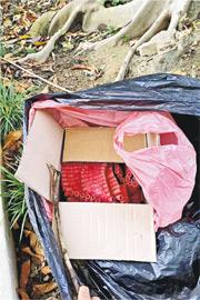 祥華邨近籃球場旁花槽檢獲兩箱爆竹-北區區議員陳旭明Facebook。