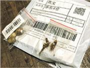 巴西近日收到懷疑來自中國的不明種子包裹,中國駐巴西使館稱可能是詐騙郵件。(網上圖片)