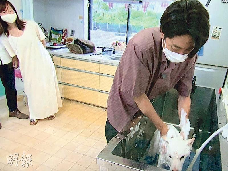 相葉雅紀探訪志村健生前飼養的愛犬,並為牠洗澡,觀眾大讚場面感動。