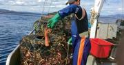 中國海關上周末收緊對澳洲進口龍蝦的通關清查,導致大量活龍蝦清關延誤而死亡。中國外交部稱有關措施是為保障消費者安全。圖為澳洲漁民在捕撈龍蝦。(網上圖片)